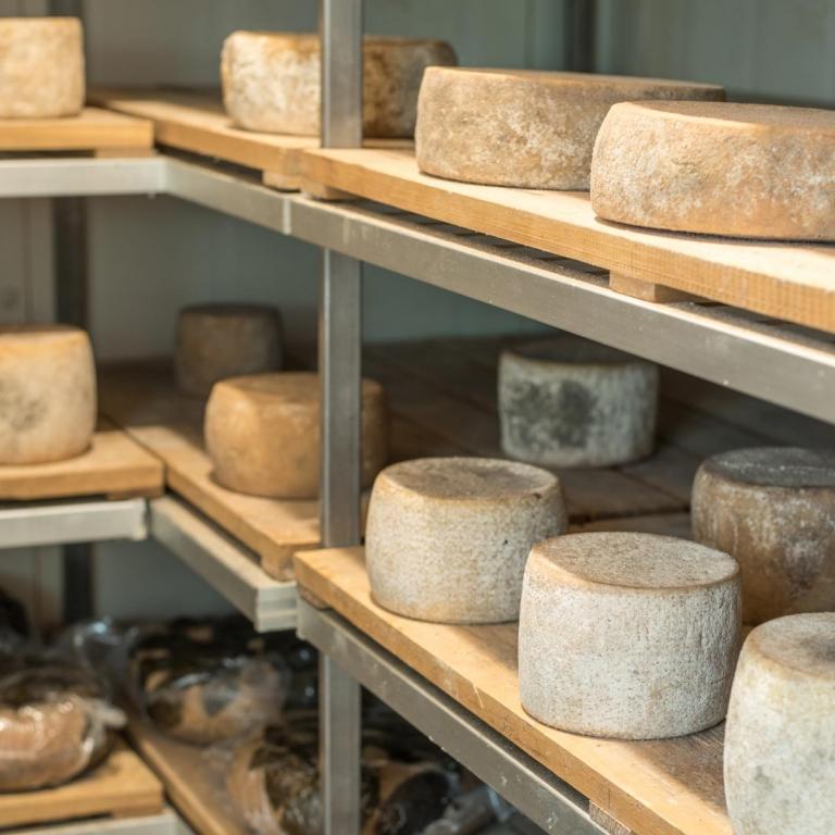 Fattoria Antonič formaggio pecorino stagionato