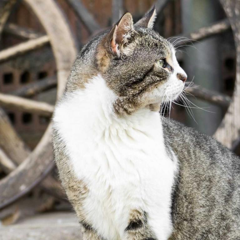 Fattoria antonic didattica animali gatto Ceroglie