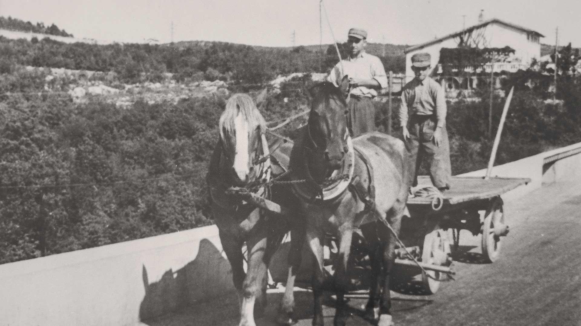 Famiglia Antonič Ceroglie foto storica agricoltura carso cavalli