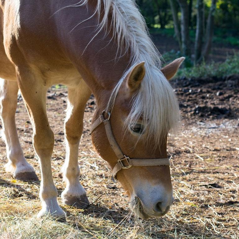 Fattoria antonic didattica animali cavallo Ceroglie