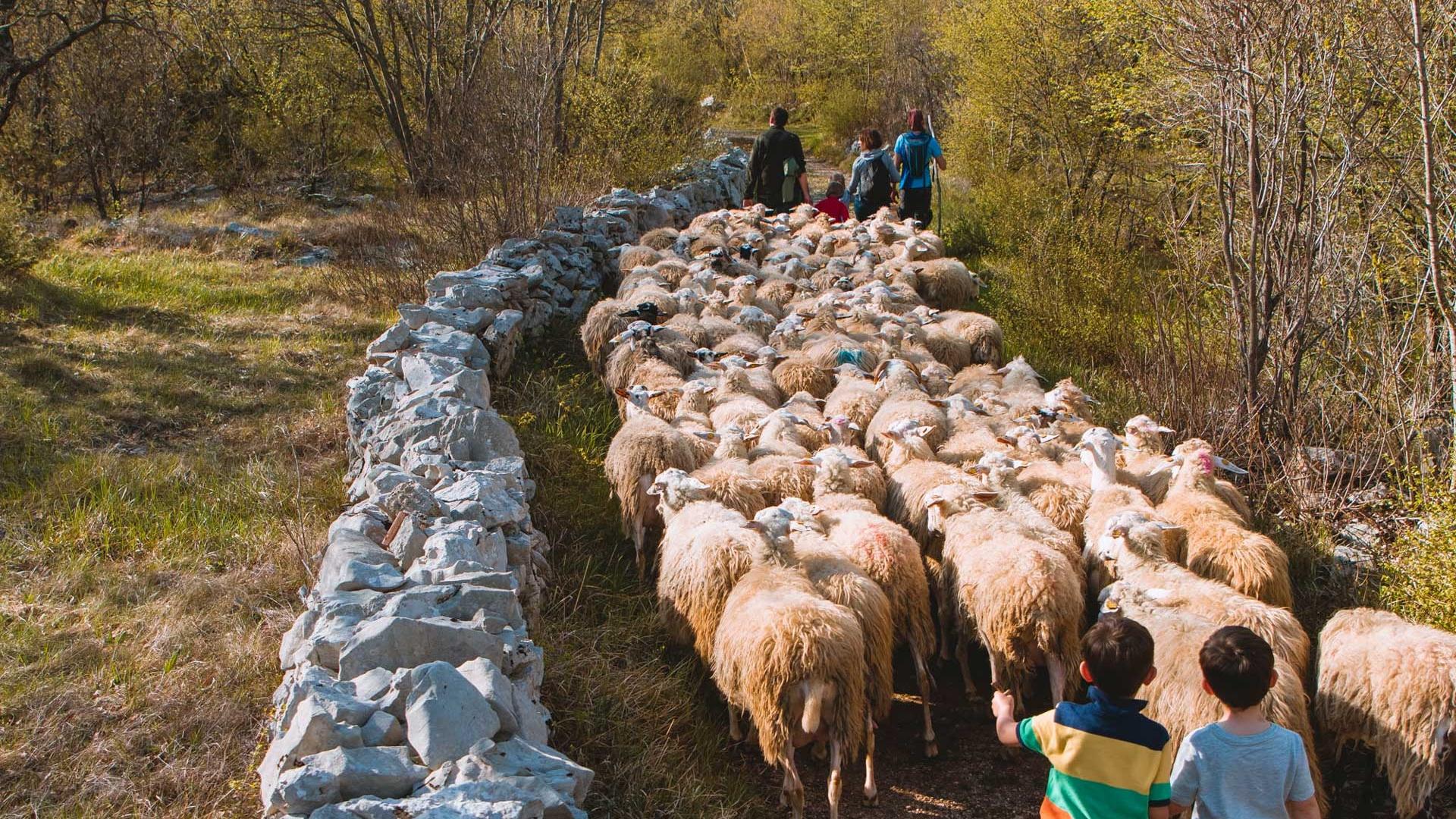 Giovani pastori fattoria didattica asino berto trieste ceroglie